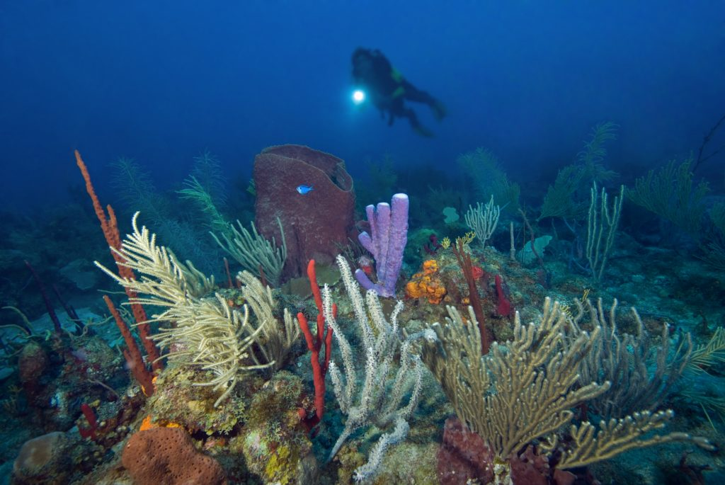 Diver in Saba