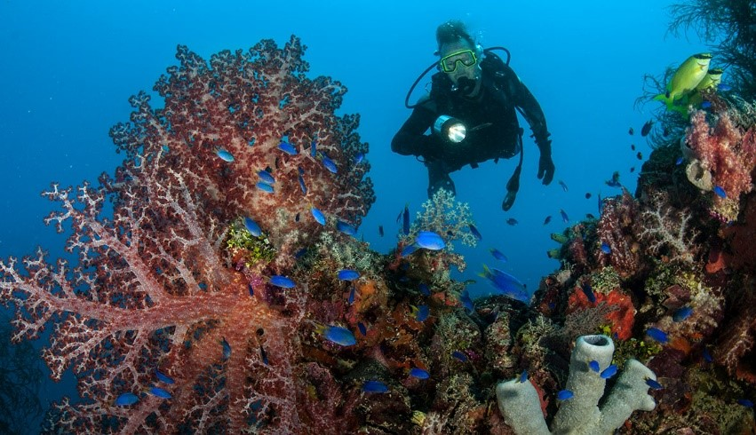 Diver in Truk Lagoon